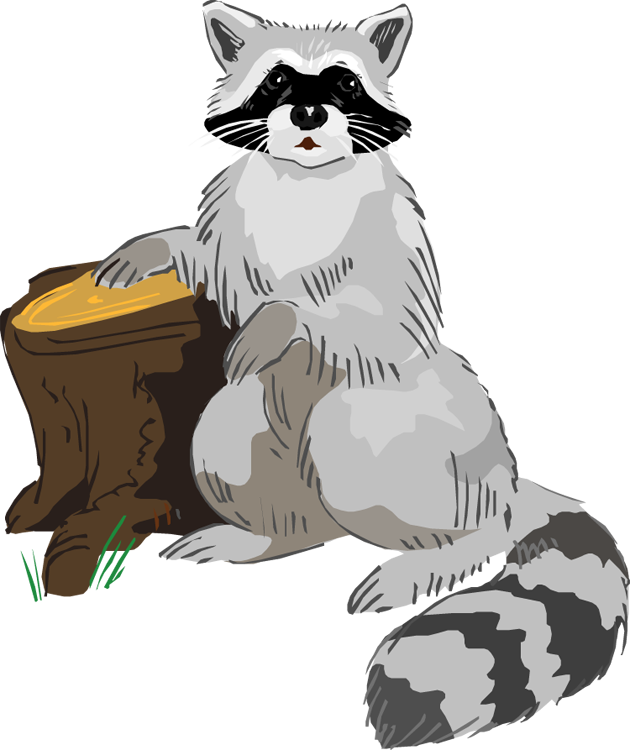Racoon clipart badger. Raccoon panda free images