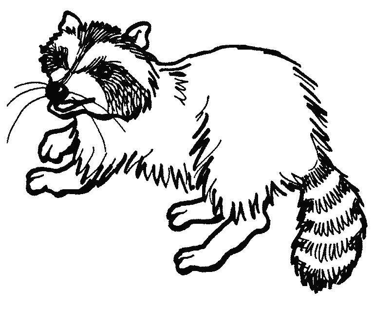 Racoon clipart black and white. Raccoon station