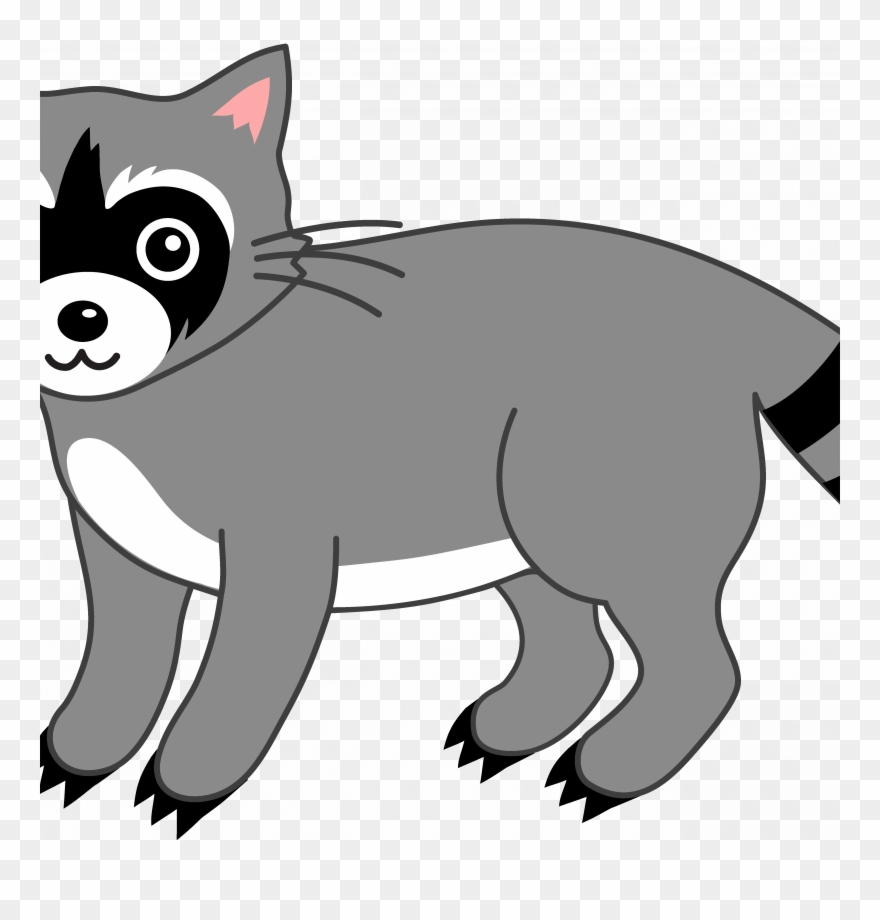 Raccoon coloring page . Racoon clipart chester