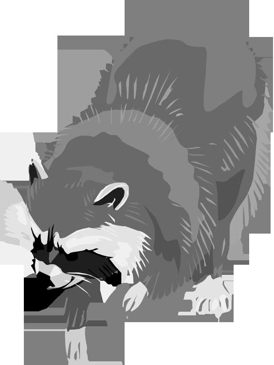 Racoon clipart gray. Free raccoon clipartix
