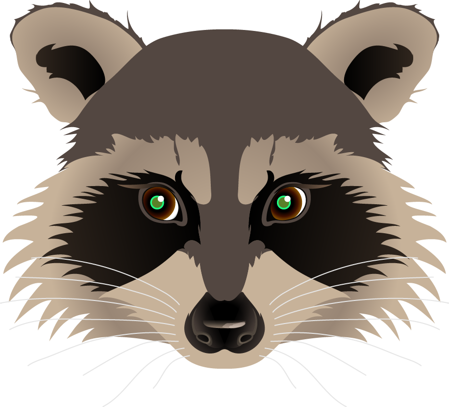 Racoon clipart grey object.  collection of raccoon