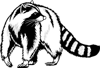 Free raccoon download clip. Racoon clipart outline