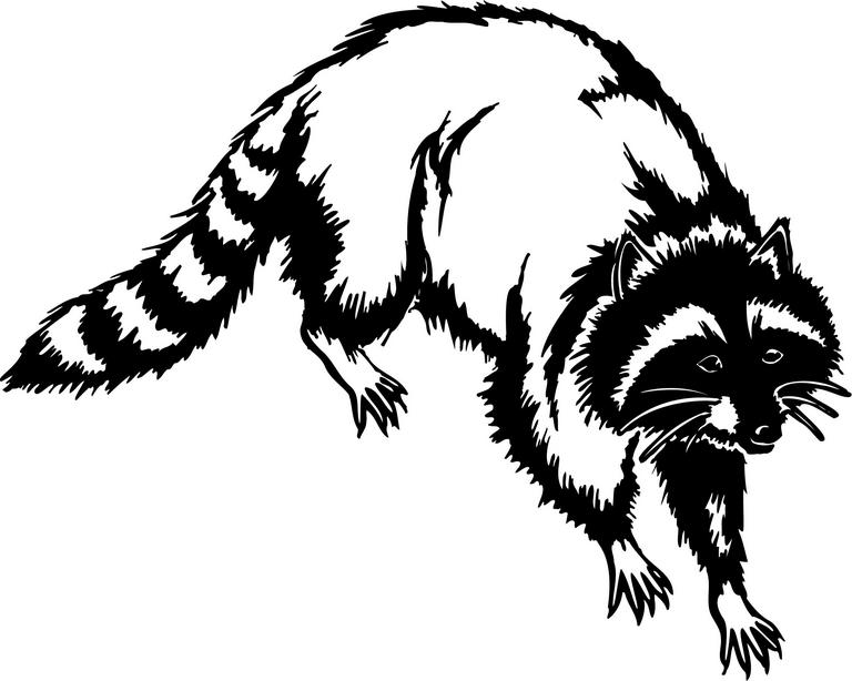 Racoon clipart raccoon tail. Library clip art