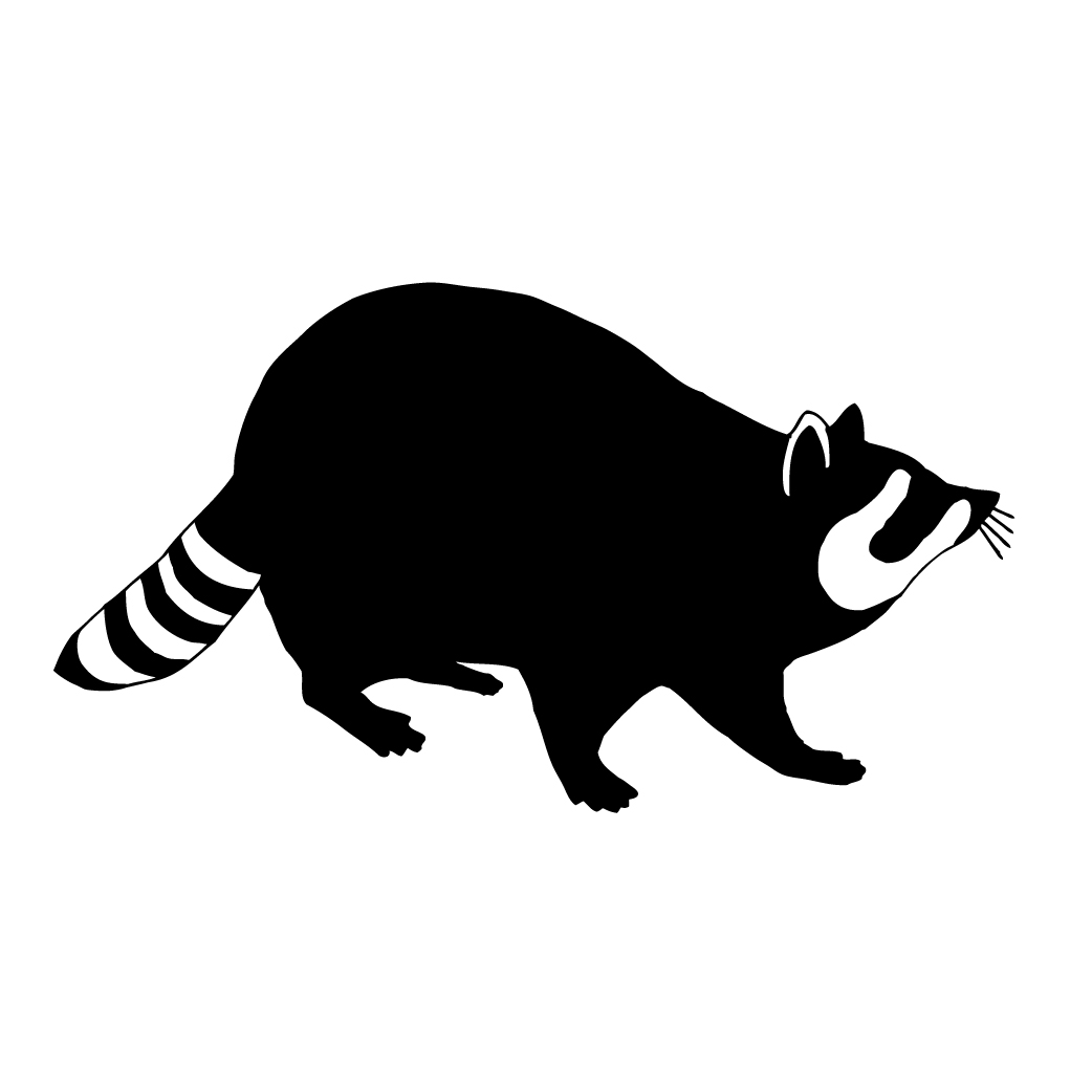 Racoon clipart simple. Raccoons free download best