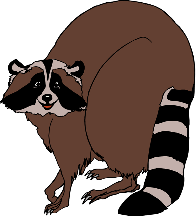 Raccoon cliparts zone free. Racoon clipart skunk