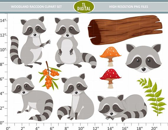 Set animal . Woodland clipart raccoon