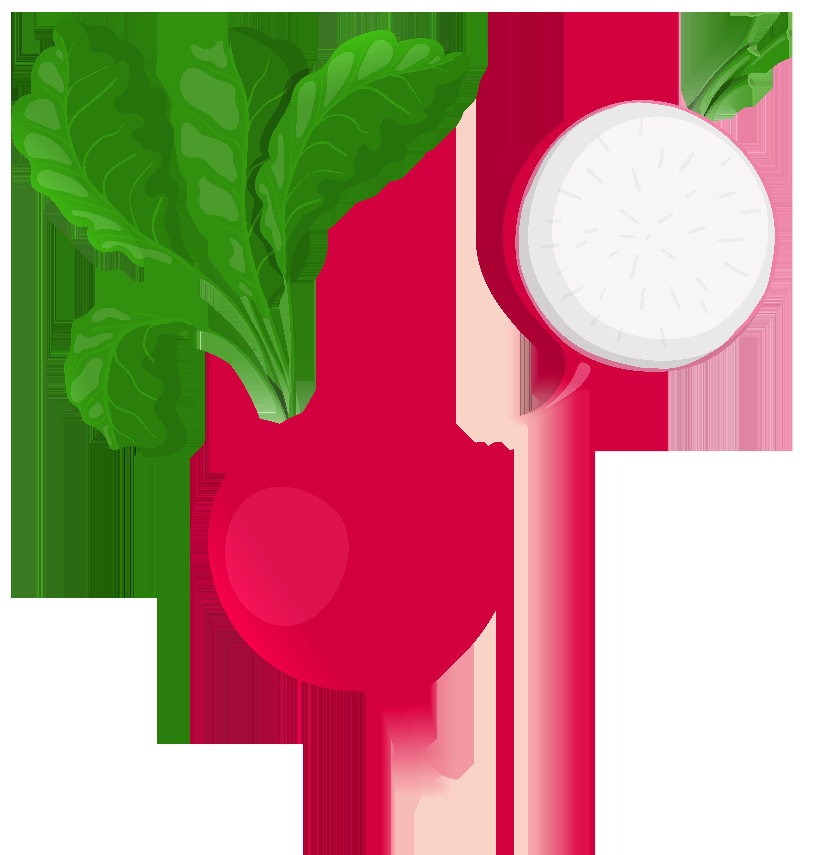 Radish png clip art. Clipart vegetables name