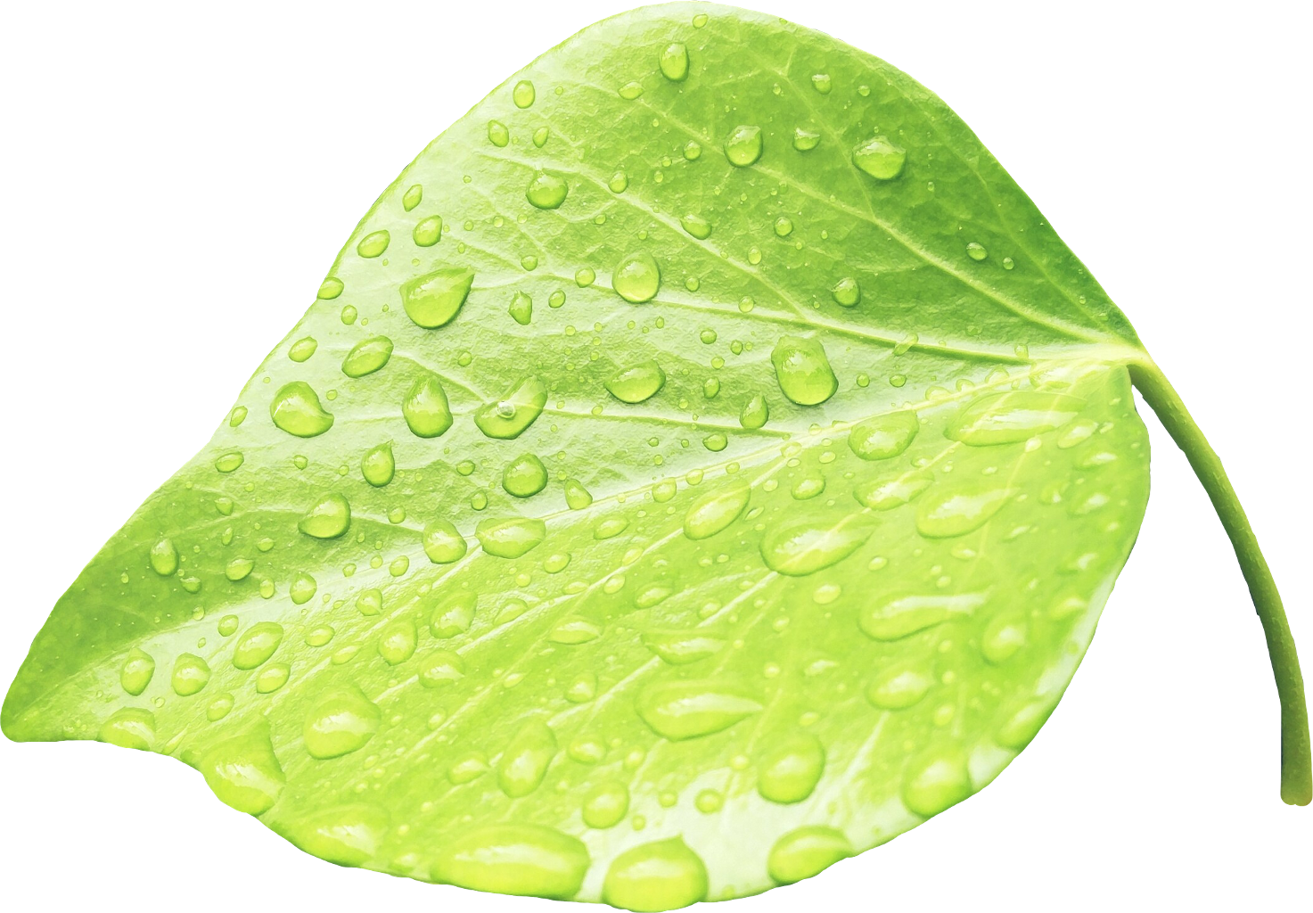 Leaves water green rain. Raindrop clipart moisture