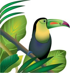 Amazon . Rainforest clipart