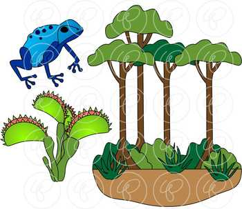 Learning about the amazon. Rainforest clipart