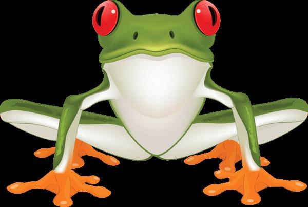 Rainforest clipart frog. Jungle cliparts zone
