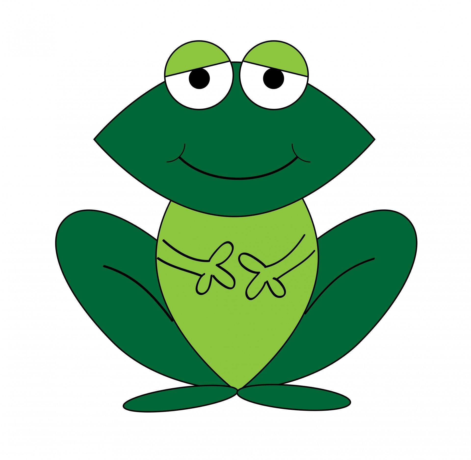 Rainforest clipart frog. Free download best