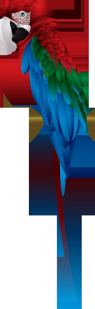 Rainforest clipart macaw. Scarlet png pinterest bird