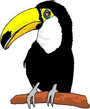 Amazon facts for kids. Toucan clipart rainforest creature