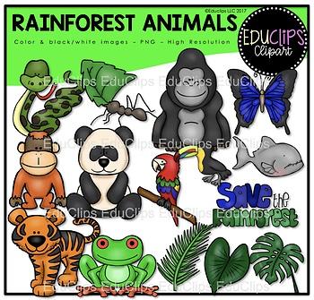 Rainforest clipart rainforest creature. Animals clip art bundle