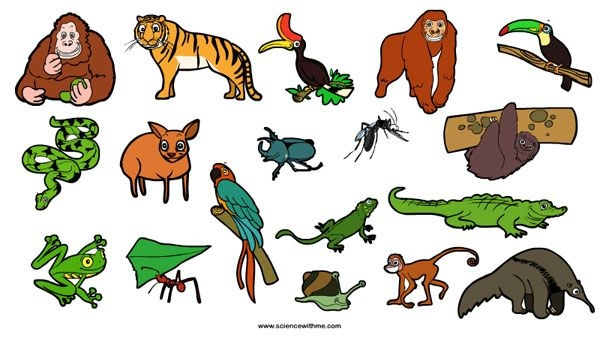 Collection of free download. Rainforest clipart rainforest ecosystem