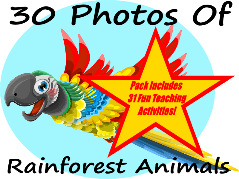 Rainforest clipart rainforest ecosystem. Bundle by peterfogarty teaching