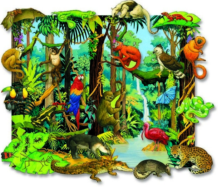 Tropical animals pictures google. Rainforest clipart rainforest ecosystem