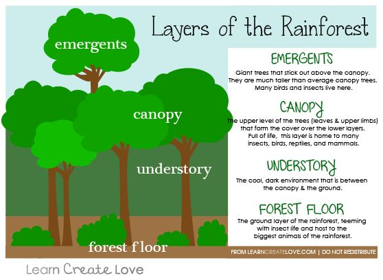 Rainforest clipart rainforest floor. Lessons tes teach