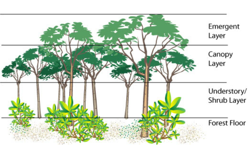 Parts of a borneo. Rainforest clipart rainforest floor