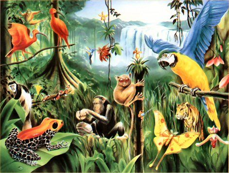 Animals in the clip. Rainforest clipart rainforest habitat