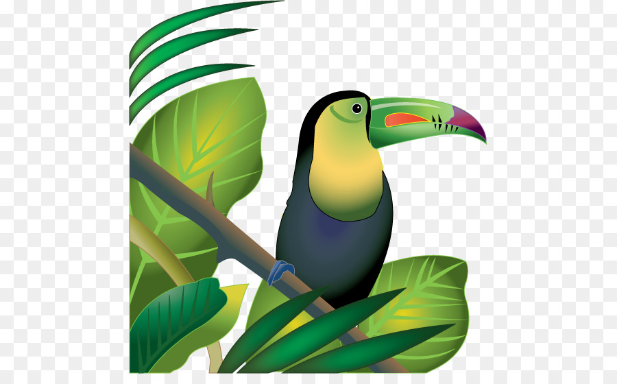 X free . Rainforest clipart rainforest insect
