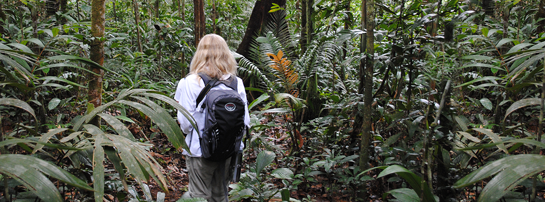 Rainforest clipart rainforest person. Free download
