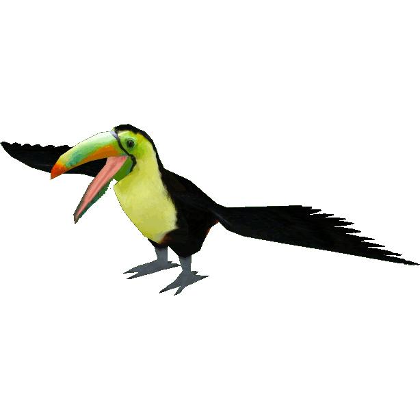 Keel billed dutchdesigns zt. Rainforest clipart rainforest toucan