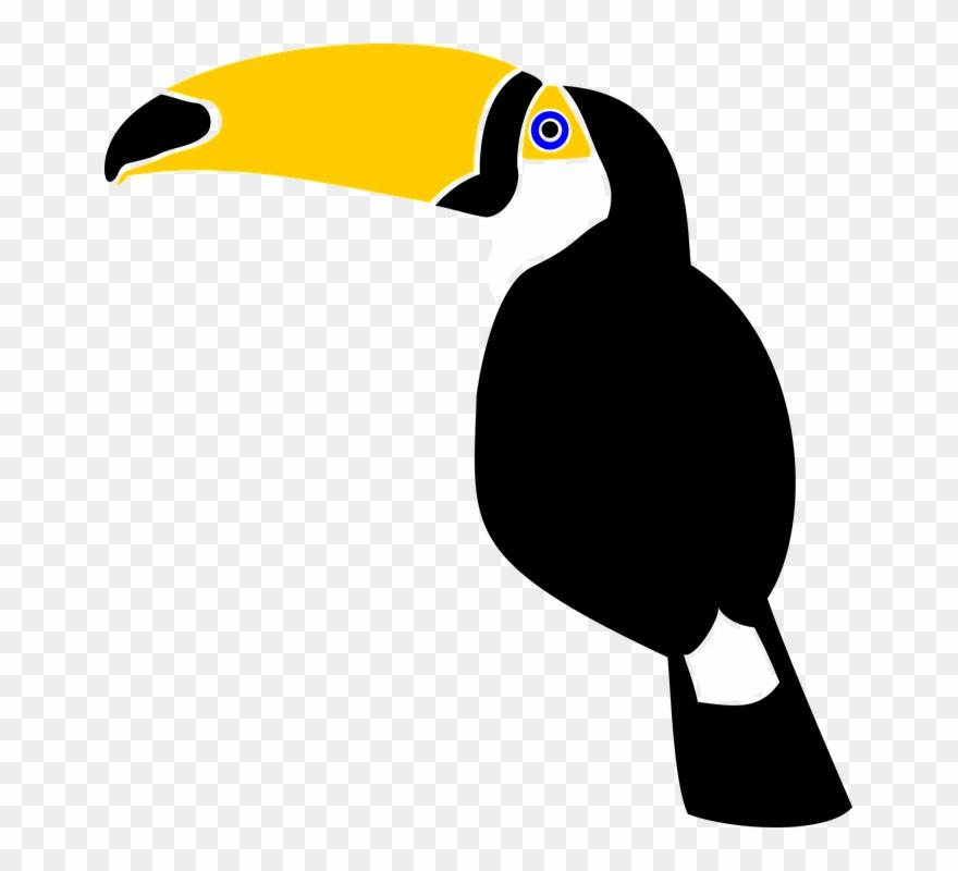 Rainforest clipart rainforest toucan. Bird jungle feather nature