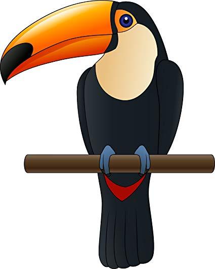Amazon com pretty cool. Rainforest clipart rainforest toucan