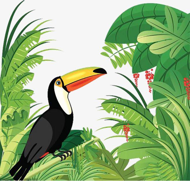 Millions of png images. Rainforest clipart rainforest toucan