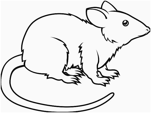 Rat clipart. Black and white elegant