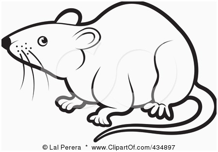 Black and white best. Rat clipart