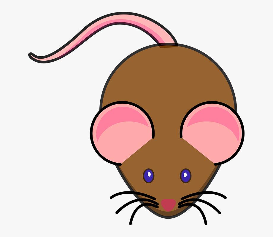 Rat clipart little mouse. Cute clip art cliparts