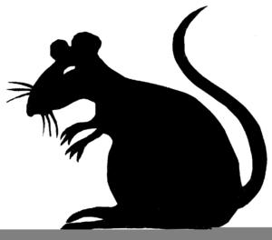 Rat clipart public domain. Rats free images at