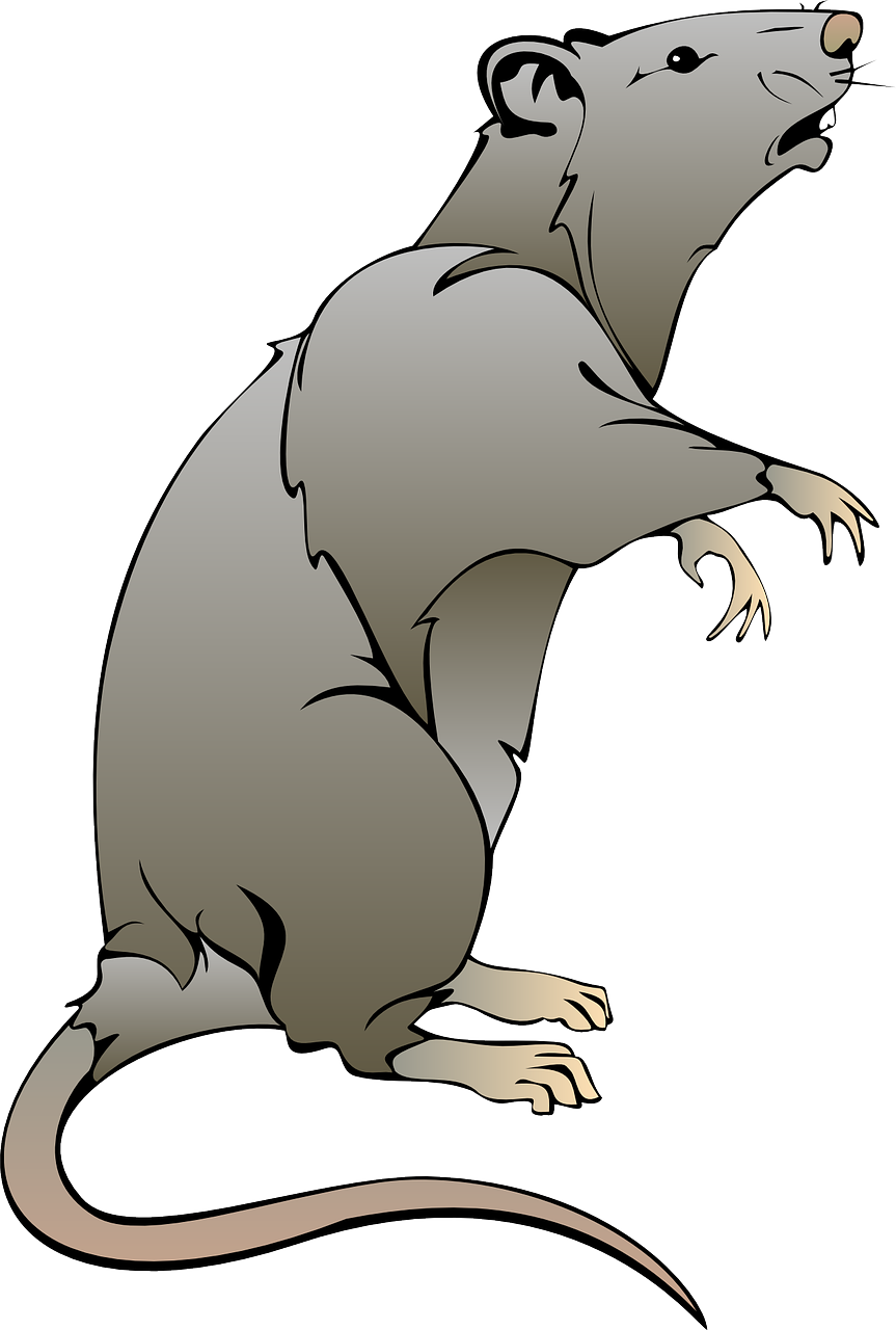 Mouse gray teeth png. Clipart rat rat tail