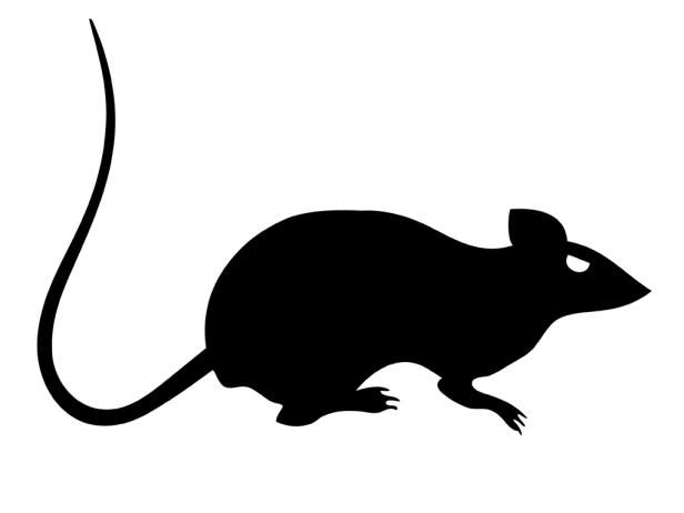 Rat clipart spooky.  printable and free