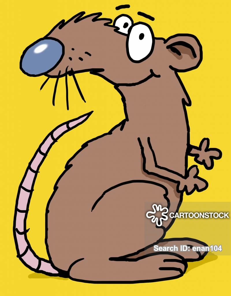 Laboratary rats cartoons and. Rat clipart vermin