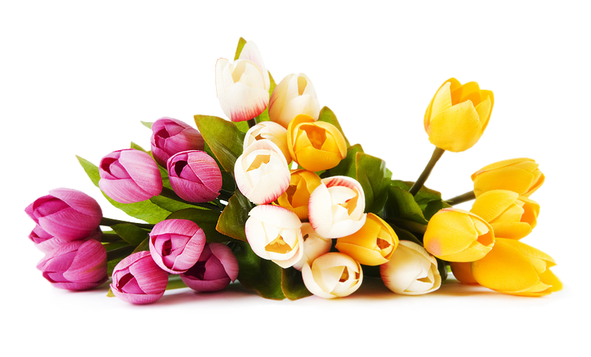 Flowers image. Real flower png