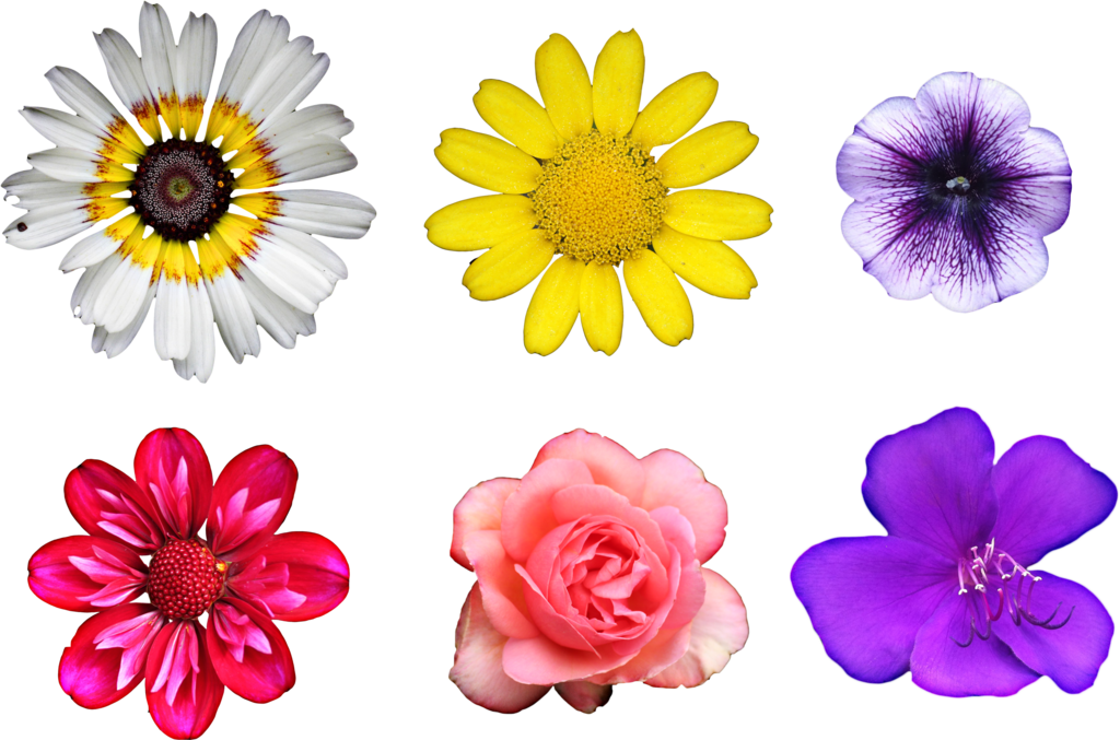 Flowers by hggraphicdesigns on. Real flower png