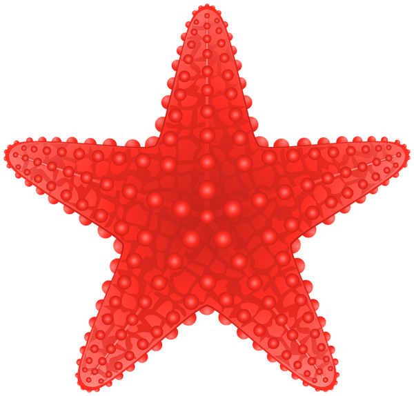 Gallery free pictures add. Shell clipart starfish