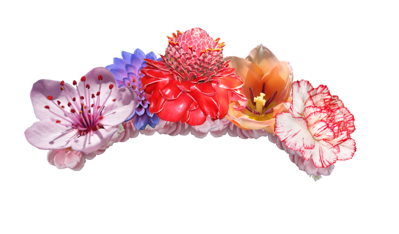 Creative transparent image mix. Red flower crown png