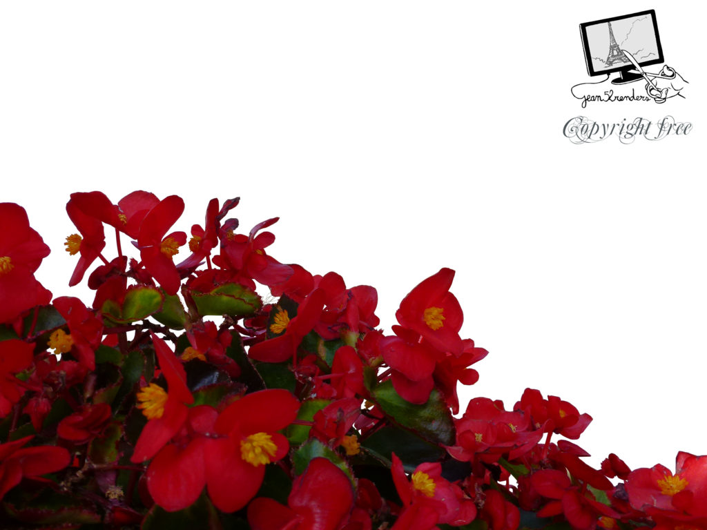 Red flower png. Flowers by jean on