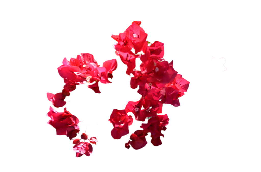 Circle of flowers stock. Red flower png