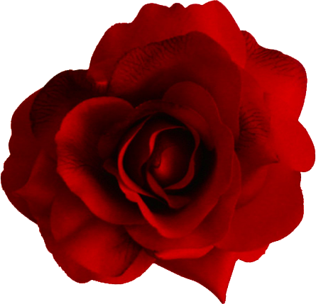 Red flower png. Rose images free download
