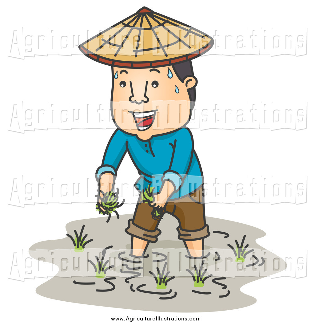 Rice clipart rice cultivation. Agriculture of a sweaty