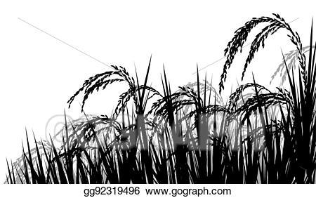 Rice clipart rice harvest. Vector art ripe for