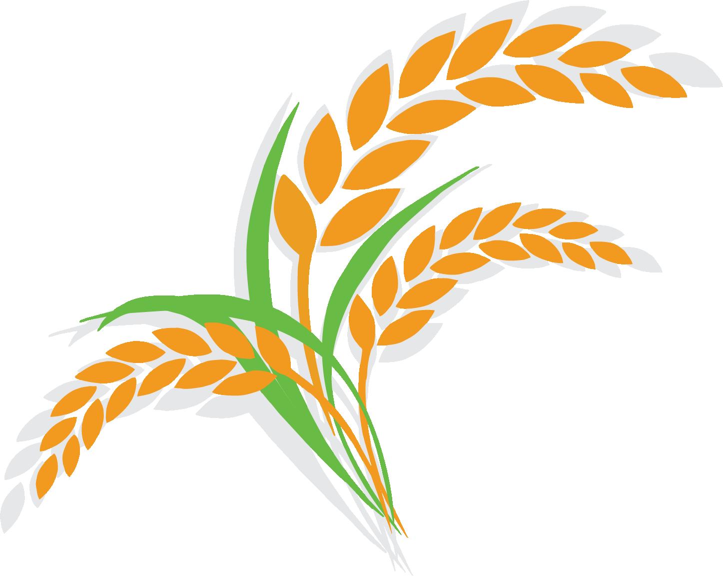 Rice clipart rice leaf. Oat wheat shutterstock illustration