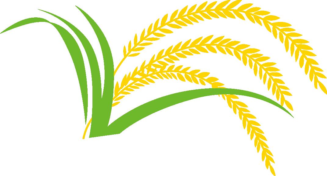 Gadu paddy field hedao. Rice clipart rice leaf