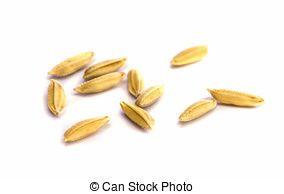 Rice clipart rice seed. Portal
